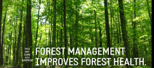 Forest management